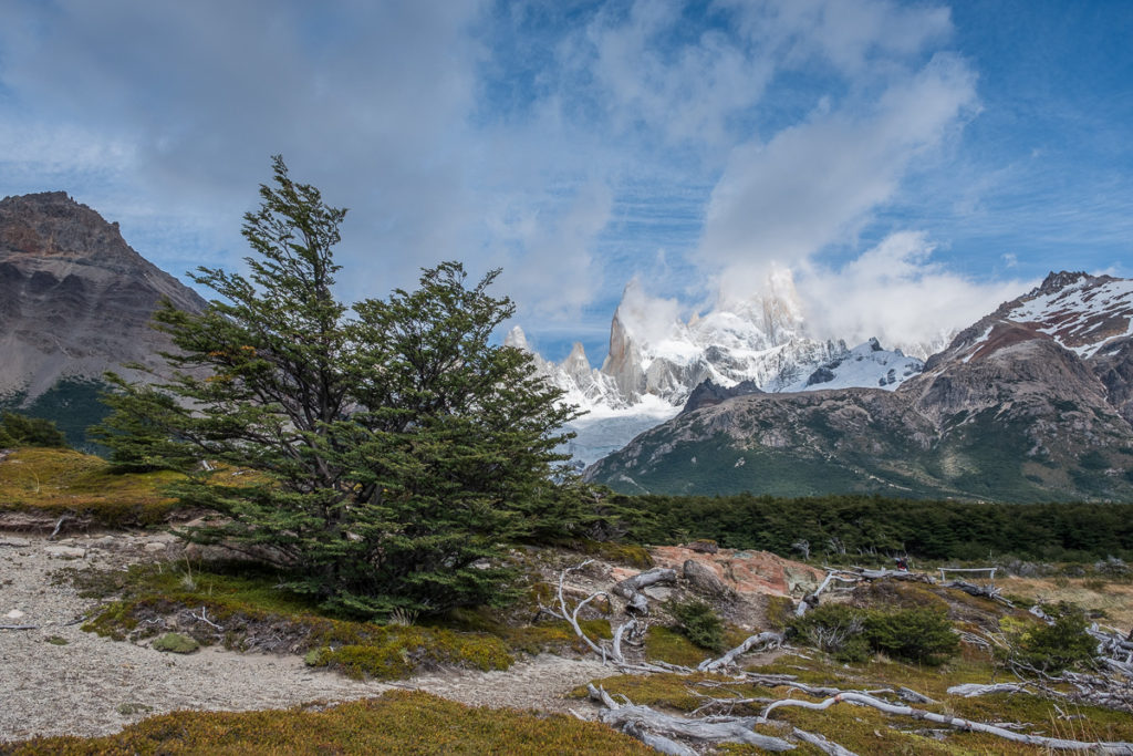 big bush in front of spectacular spiky mountain on El Chalten circuit