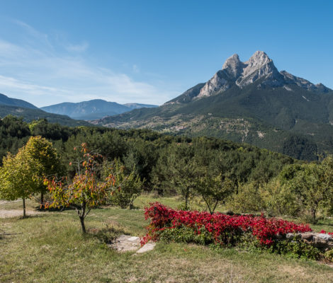 Pedraforca mountain from the far with two summits and colorful flowers in foreground