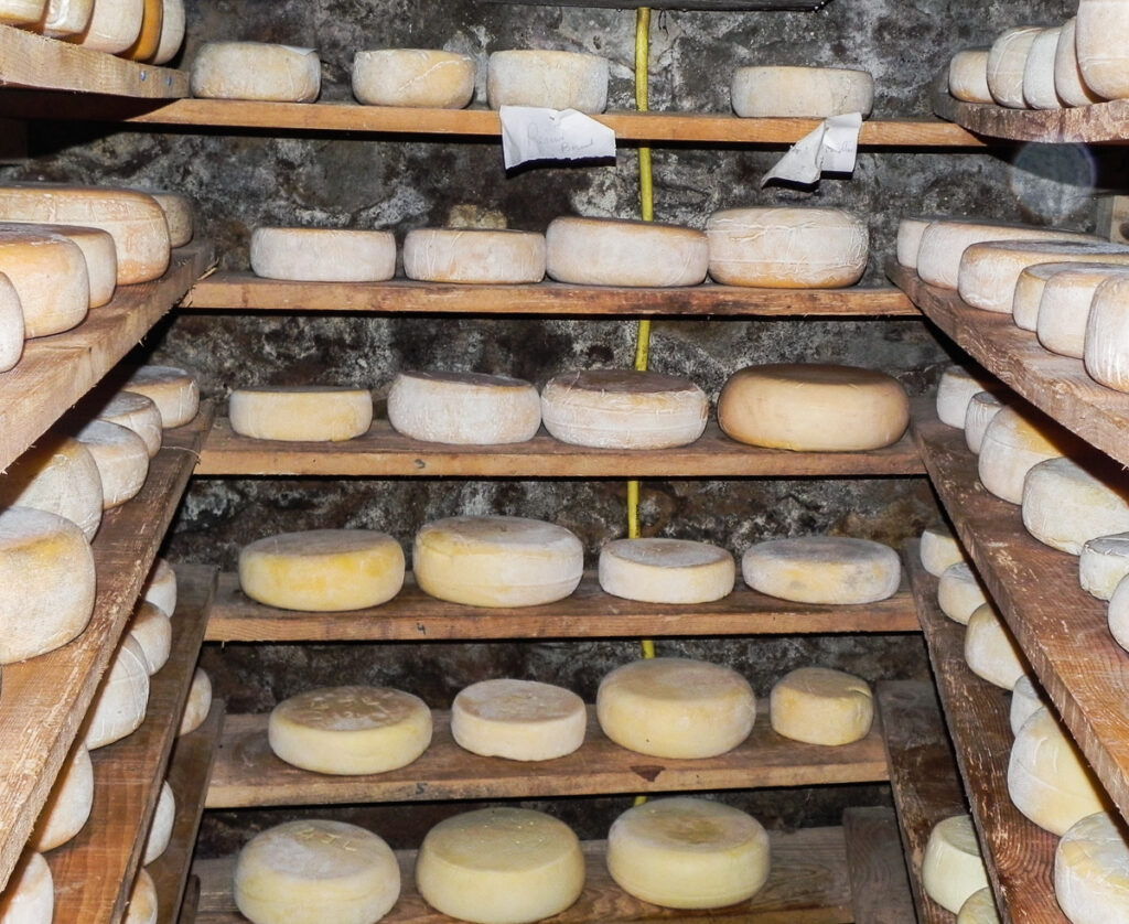 a wheels of cheese inside the chese production farm