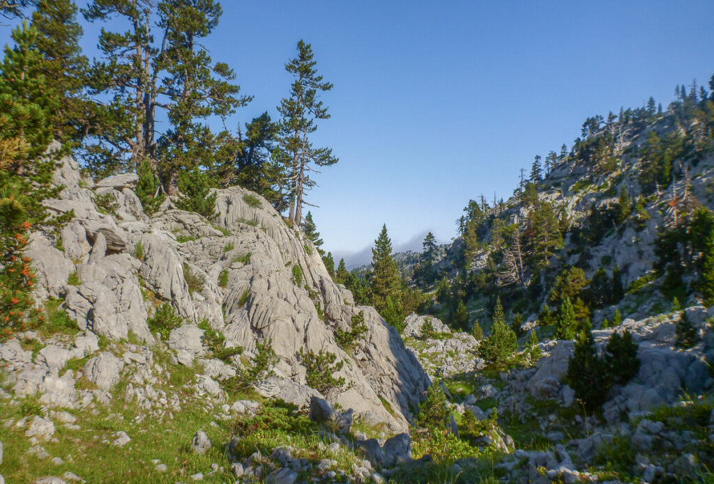 limestone rocks mixed up with pine trees