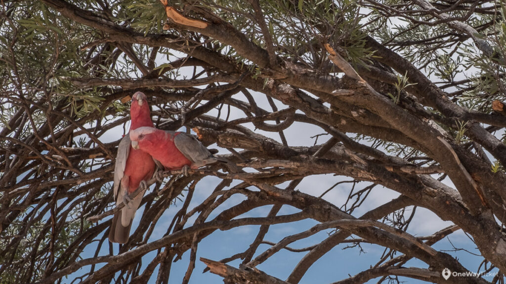 Two red parrots sitting on the tree branches in the hot summer