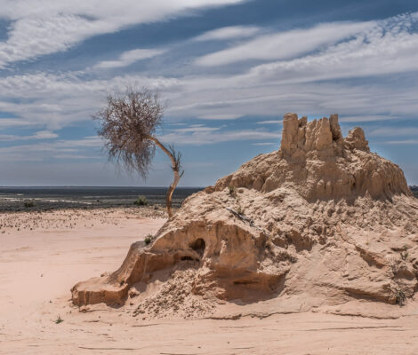 clay formation in Mungo national park in Australian outback with dry trea on the sand hill